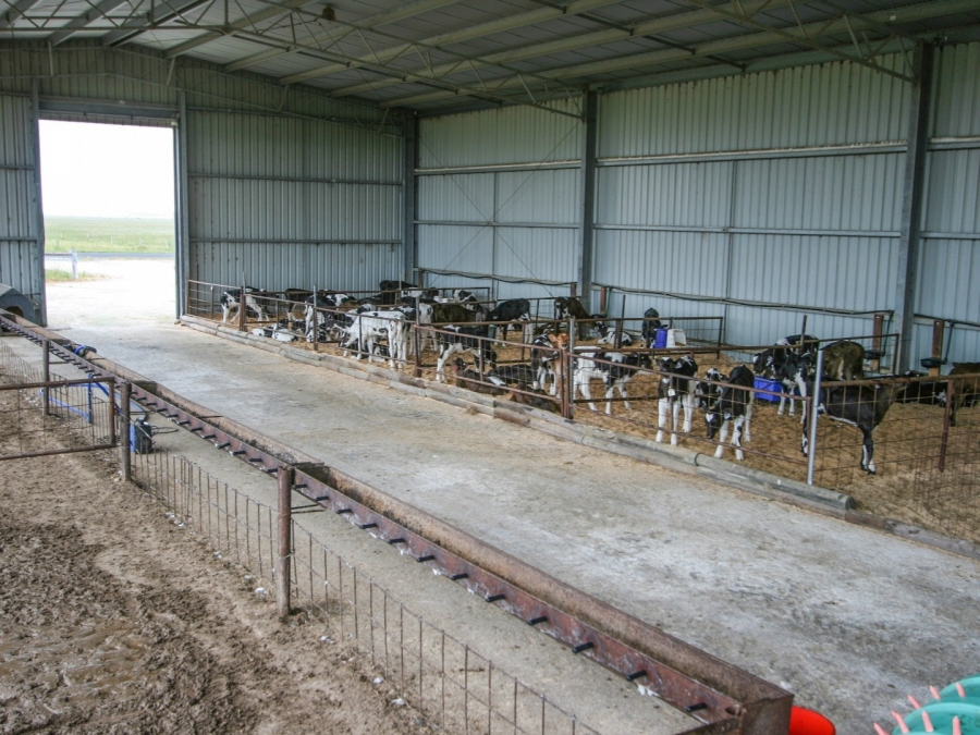 Calf Shed 11 Spanlift WbzRjY