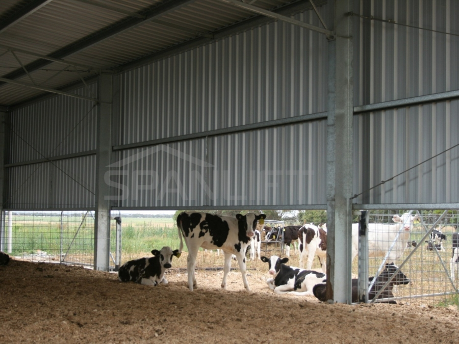 Calf Shed 19 Spanlift udH0Tw - Gallery