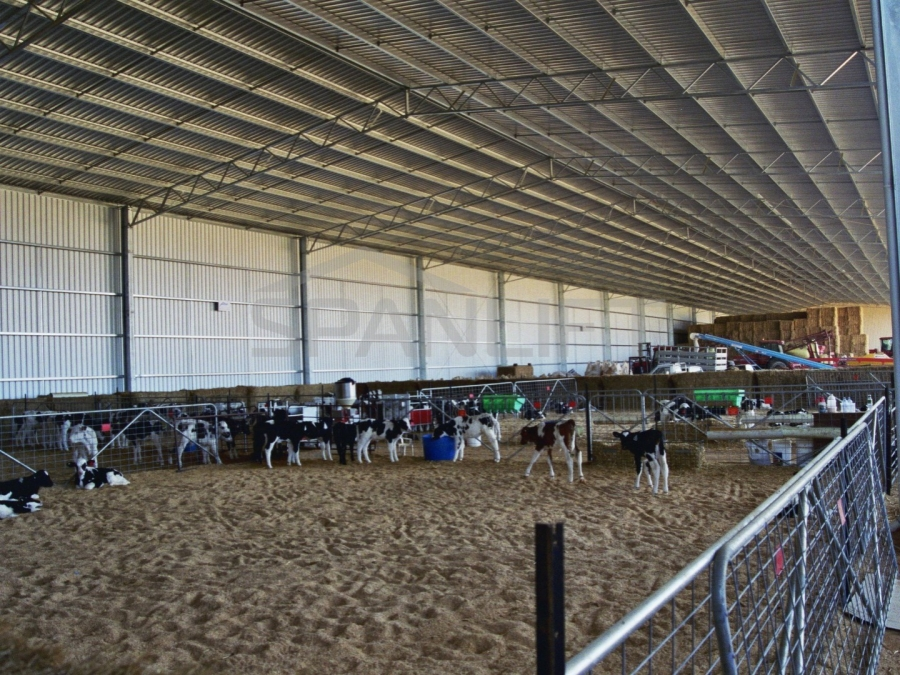 Calf Shed 3 Spanlift L4z6m2 - Gallery
