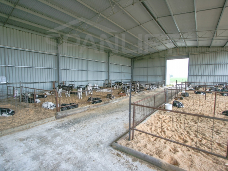Calf Shed 5 Spanlift tuYsno - Gallery