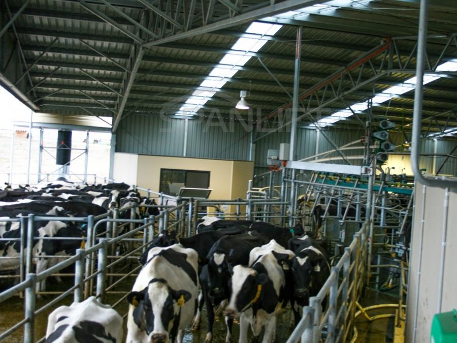 Dairy Sheds 2b5e2iv - Rotary Dairy