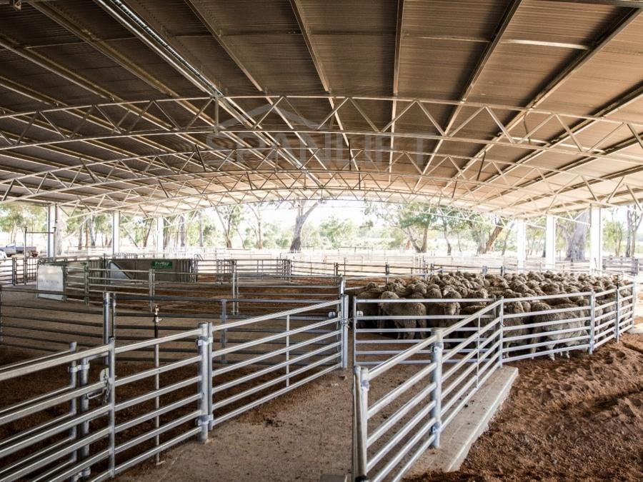 Sheep Yard Cover 14 Spanlift 1OwcIa - Yard Covers