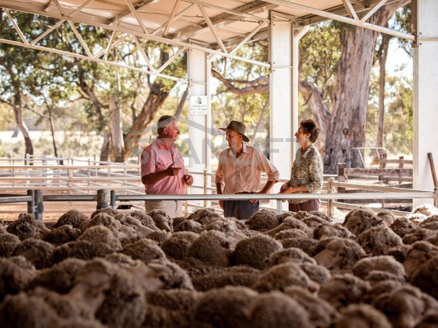 Sheep Yard Cover 17 Spanlift EZ0M S - Yard Covers
