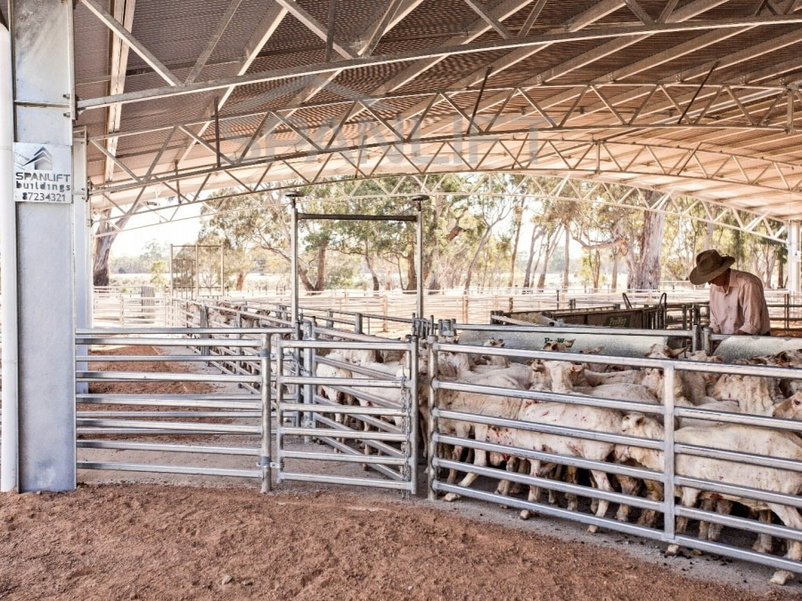 Sheep Yard Cover 18 Spanlift NDR0LF - Gallery