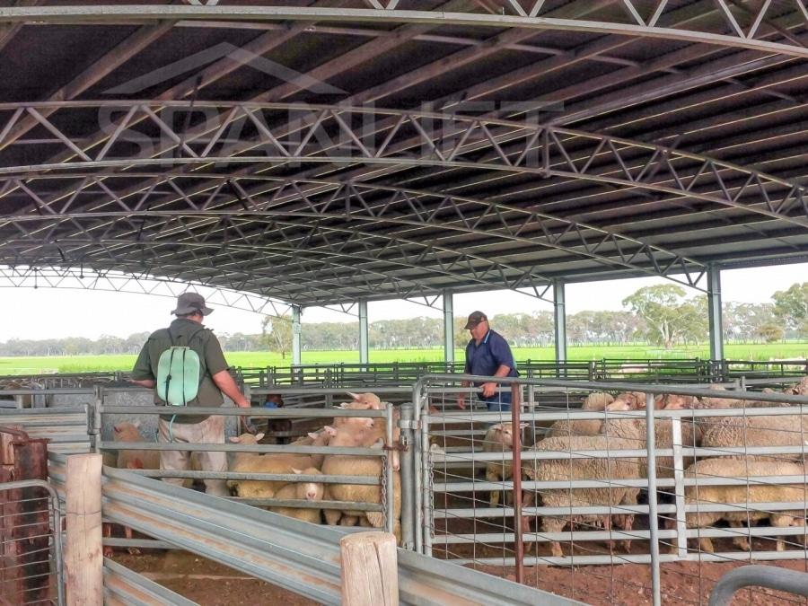 Sheep Yard Cover 2 Spanlift vwH3TB - Yard Covers